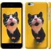 Чехол Чёрно-белый кот на жёлтом фоне 139c-45