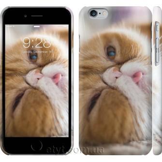 Чехол Смешной персидский кот 3069c-45